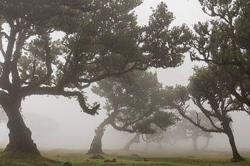 Fairytale auf Madeira sur Paul Wendels