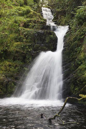 O'Sullivans Cascade van