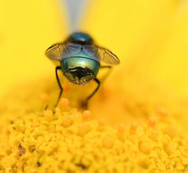 Bottle fly on flower von Ingrid Ronde