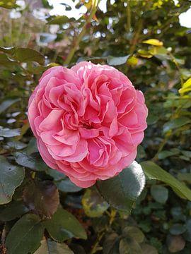 roos van Joelle van Buren