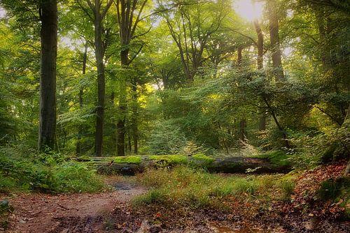 Beleef het bos van