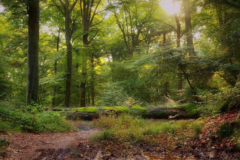 Beleef het bos van Marc Crutzen