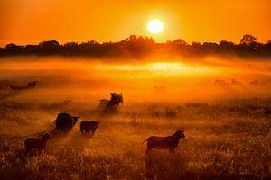 Schapen en lammetjes in de mist bij zonsopkomst in de lente