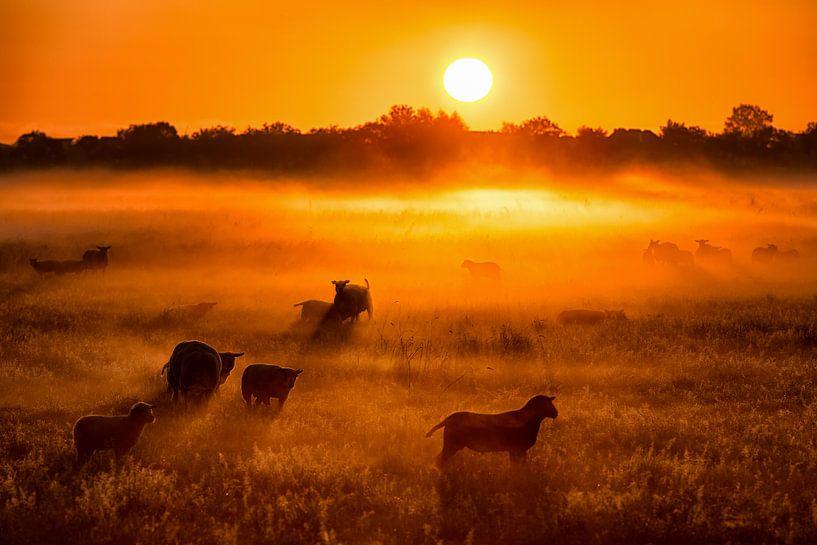 Schapen en lammetjes in de mist bij zonsopkomst in de lente van Bas Meelker