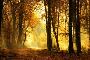 Pad door een mistig bos tijdens een mooie mistige herfstochtend van Sjoerd van der Wal