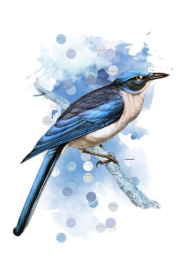 The Drawings of Birds