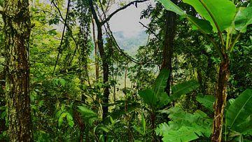 Grüner Dschungel von Lynn's foto's