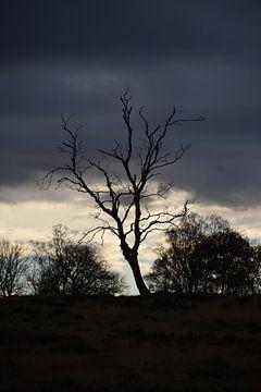 Kahlköpfiger Baum bei Sonnenuntergang. von Jurjen Jan Snikkenburg