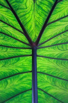 Leaf it to green van