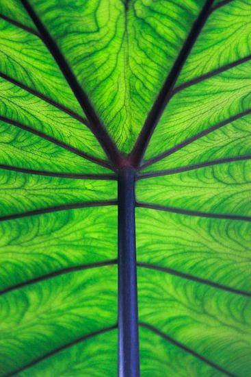 Leaf it to green