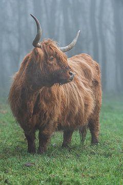 Schotse hooglander mist van Bart Lindenhovius