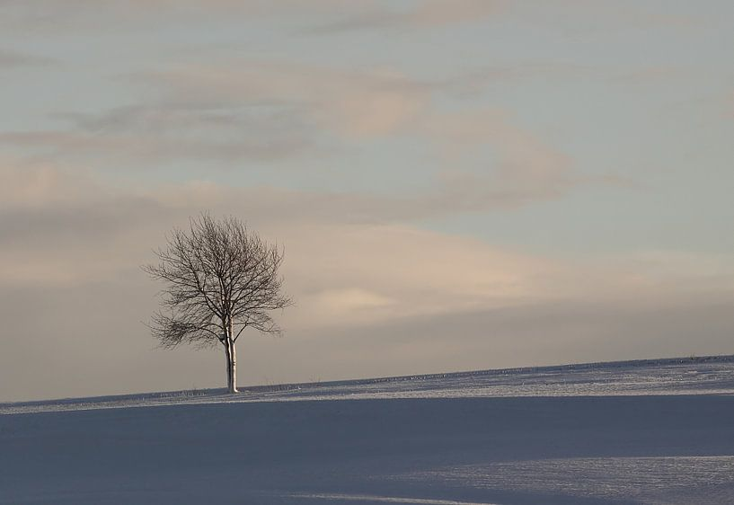 Boom in sneeuwlandschap van MSP Canvas