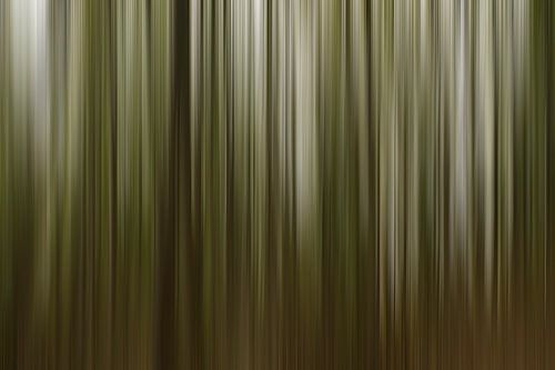 Wood... van Hans Kool