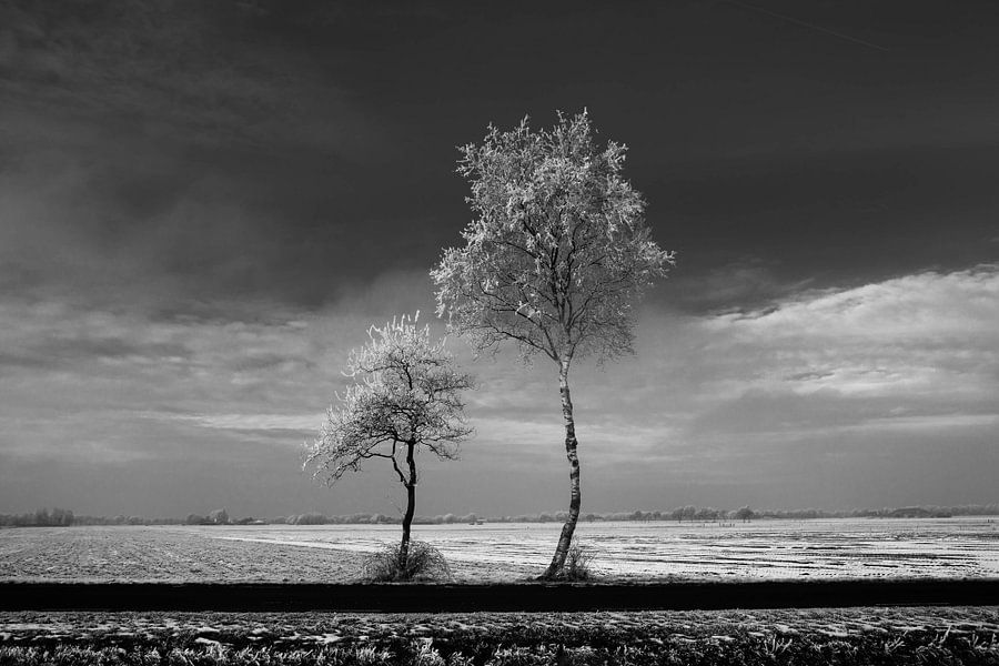 Trees #1 van Anne Koop