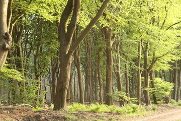 Sprookjes bos van Jayne Wilby