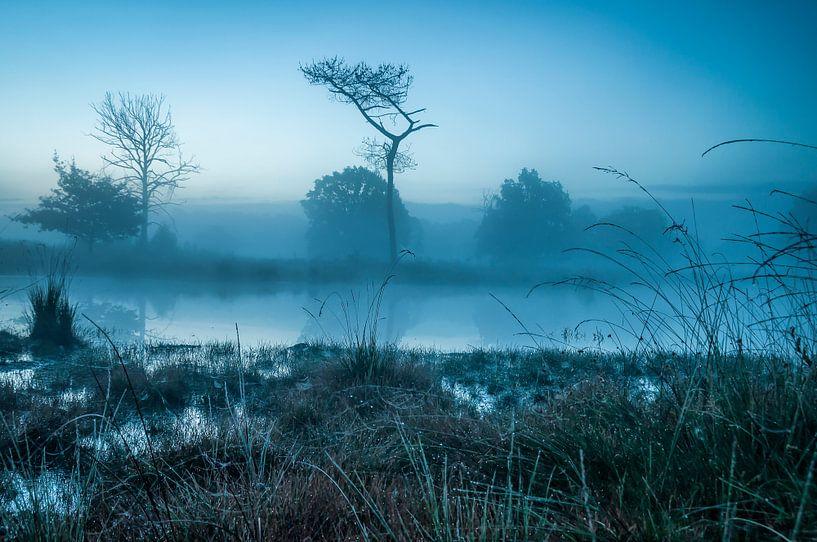 Blue world van Peter Bijsterveld