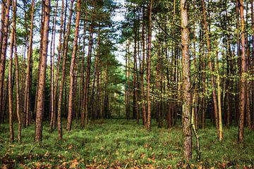 Over de bergen en door het bos van Yannai van der Werff
