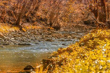 Kleiner Fluß im Wald von Achim Prill