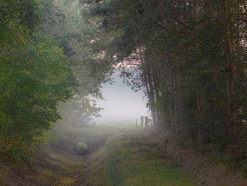 droge sloot in de mist van Tania Perneel