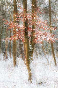 Winterbaum von Arjen Noord