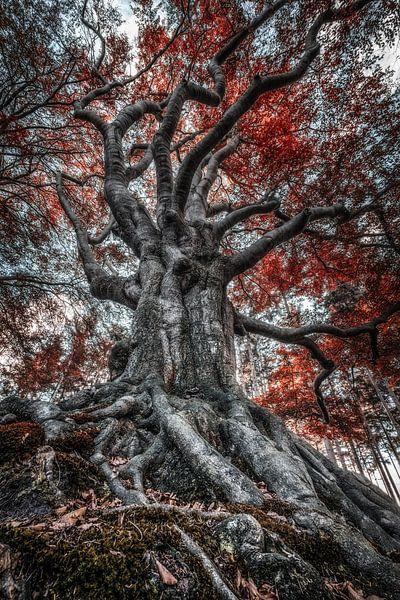 De koning van het woud van Niels Barto