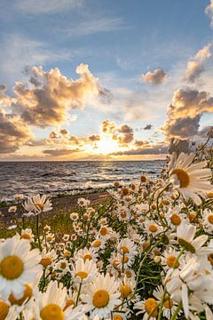Blumenmeer auf dem IJsselmeer von Peter Abbes
