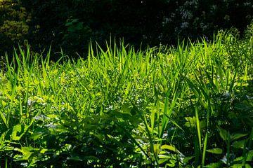 Het gras van Joerg Keller