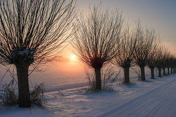 Knotwilgen in de sneeuw von Marga Vroom