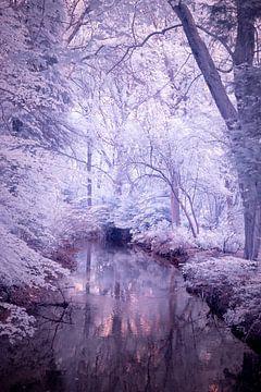 Zauberwald von Fotografie Marco Houben
