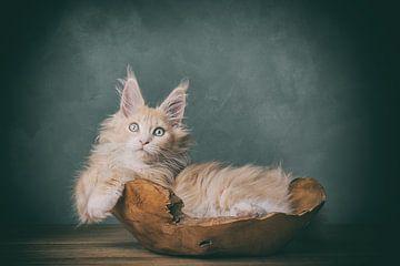 kitten in het bakkie van mirka koot