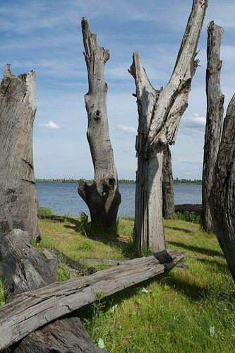 Bomen sculptuur in water landschap van