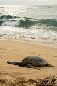 Hawaiian green sea turtle van