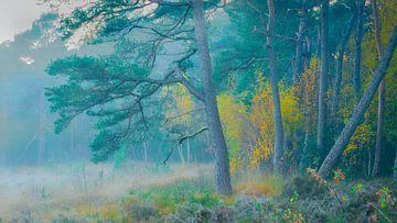 Wald der Eese von Mark van der Walle