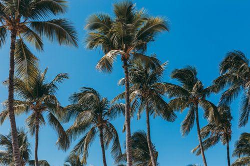 Palmbomen op een zonnige dag met een blauwe lucht. van Aruba Paradise Photos