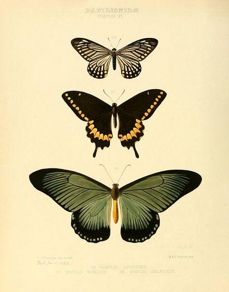 Vintage vlinder illustratie  van Vintage en botanische Prenten