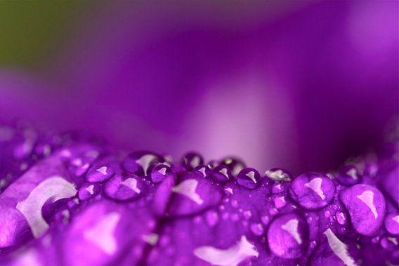 Diamonds of nature