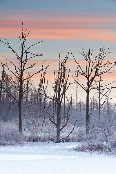 Winter Sunrise van Dion van den Boom
