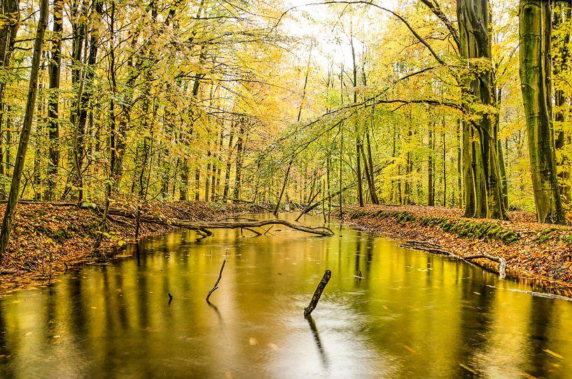 Waterloop in het bos van Frans Blok
