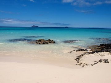 Prachtig strand, Galapagos von Roos Vogelzang