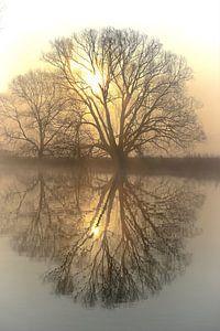 Bäume an der Ruhr van