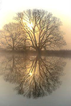 Bäume an der Ruhr van Bernhard Kaiser