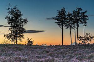 Zonsondergang bij natuurgebied Den Treek in Leusden
