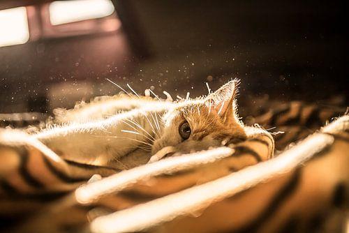 Kat Tijdens Zonsondergang van
