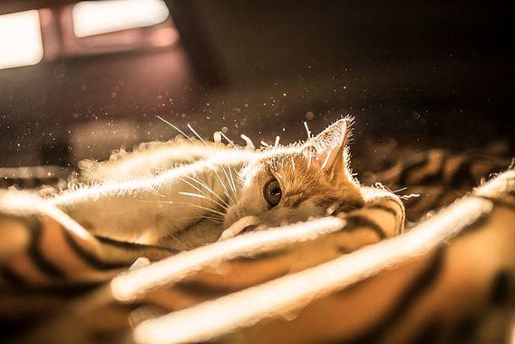 Kat Tijdens Zonsondergang van Felicity Berkleef
