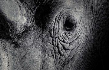 Leiden Sie unter Tränensäcken unter den Augen? Frag ihn!!! von Joris Pannemans - Loris Photography