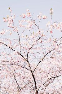 Blüte Baum