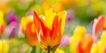 Frühlingsfarben von Monika Scheurer