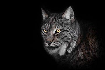 gevaarlijke blik van de gloeiende ogen van de lynx in de nacht, snuit... van Michael Semenov