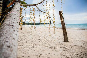 Muscheln am Strand von Thailand von Lindy Schenk-Smit