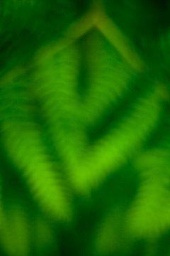 Ferns von Halma Fotografie